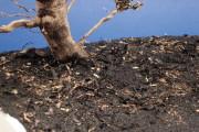 MIG Europe Dry Mud (4)